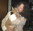 Big Al with Moremi, WCE&CF's Caracal kitten