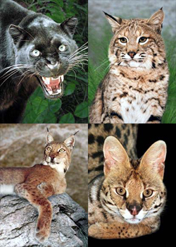 photo collage of Usiku, Zuni, Oksana and Nakuru